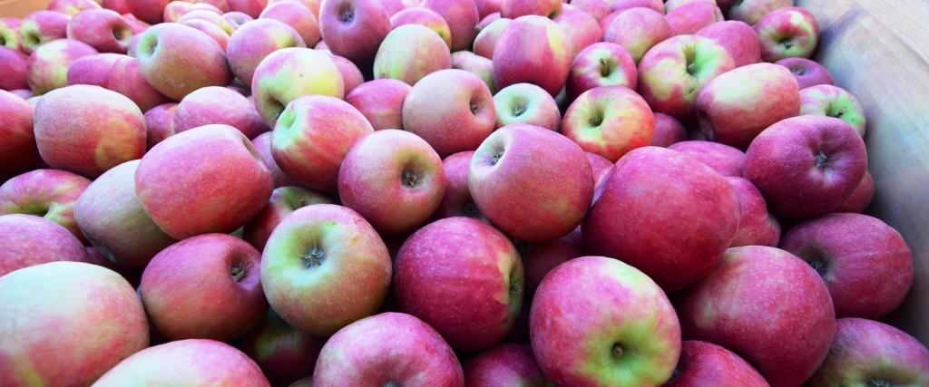 Apples-smaller-crop